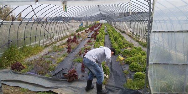 2019年03月16日 【渡邉農園】援農ボランティア
