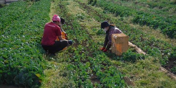 2019年02月23日福姫会 【株式会社みうら鈴木園】援農ボランティア