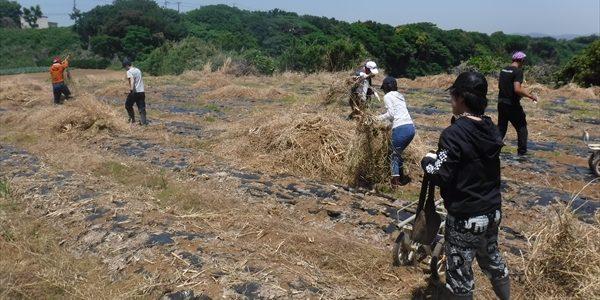 2019年05月25日 【渡邉農園】援農ボランティア