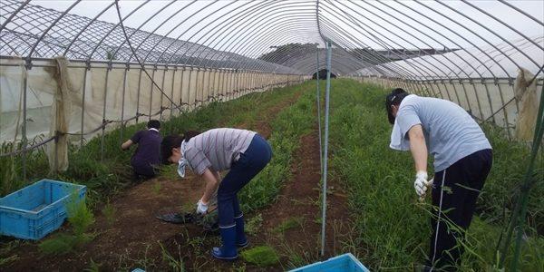 2019年07月20日 【渡邉農園】援農ボランティア