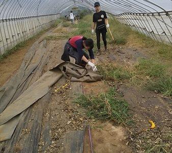 2019年09月21日 【渡邉農園】援農ボランティア
