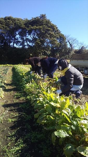 2020年02月09日 【三浦由長嶋農園】農業体験イベント