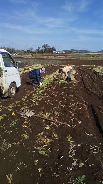 2020年03月01日 【三浦由長嶋農園】農業体験イベント