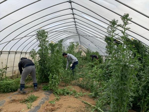 2020年03月07日 【渡邉農園】援農ボランティア