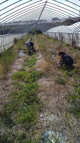 2020年02月29日 【渡邉農園】援農ボランティア