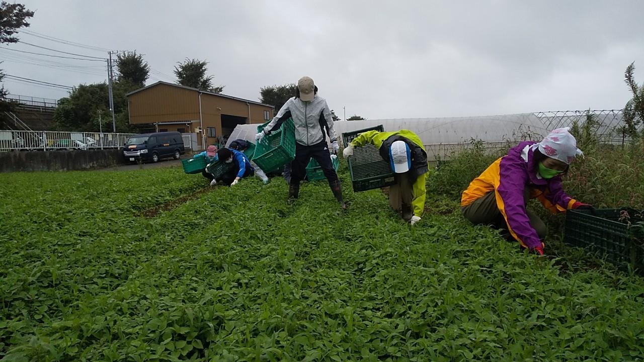 2020年09月26日 【渡邉農園】援農ボランティア
