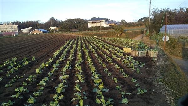 2020年12月20日 【みうら鈴木園】体験農園ボランティア