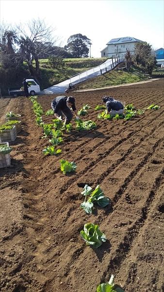 2021年2月7日 【みうら鈴木園】体験農園ボランティア
