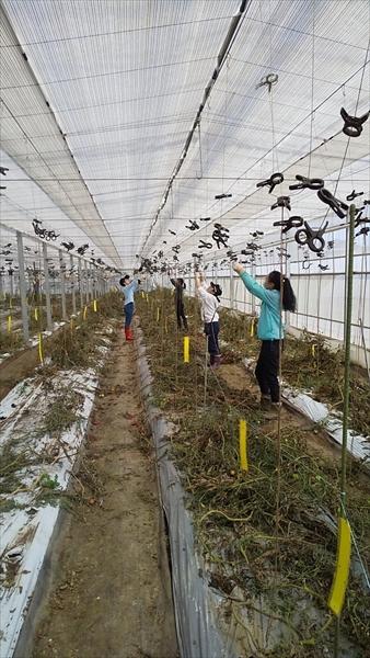 2021年3月14日 【みうら鈴木園】体験農園ボランティア