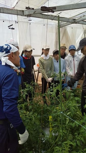 2021年5月9日 【みうら鈴木園】体験農園ボランティア