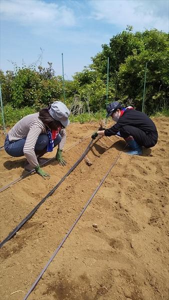 2021年4月29日 【渡邉農園】援農ボランティア