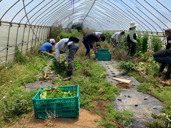 2021年5月23日 【渡邉農園】援農ボランティア